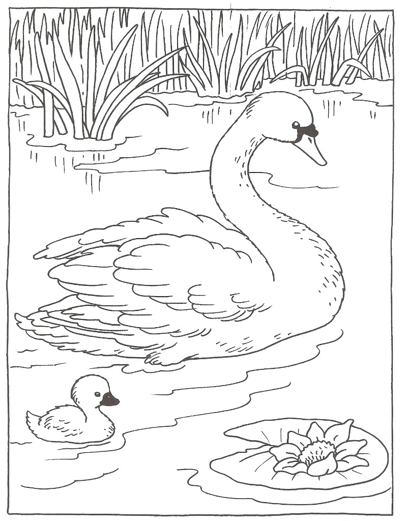 Pin coloriage cygne on pinterest - Coloriage cygne ...
